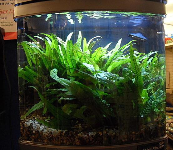 Freshwaterplants
