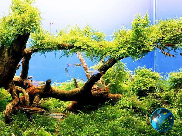 Five Easy To Keep Freshwater Aquarium Plants Captive
