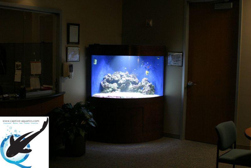 Captive-aquatics-custom-acrylic-aquarium-installation-the-woodlands-memorial-herman