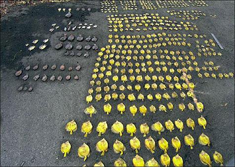 A-dark-hobby-dead-yellow-tangs-robert-whitner-bob-fenner-neale-monks