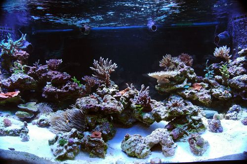 I Have Been A Bad Reefer: When I Received Free Liverock I Took Advantage Of  It. I Took Advantage Of It To The Point Where My Tank Is Literally Stuffed  To ...