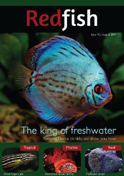 image from redfishmagazine.com.au