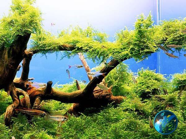 Five Easy To Keep Freshwater Aquarium Plants Captive