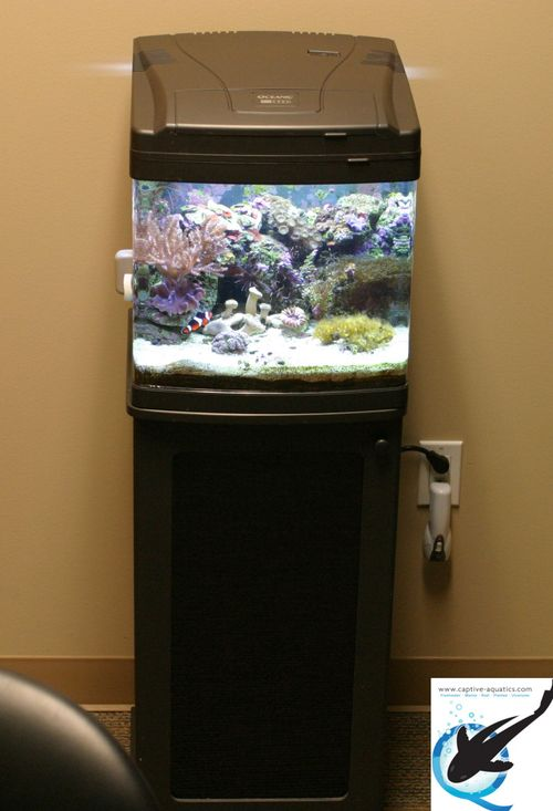 Captive-aquatics-nano-reef-aquarium-design-installation-the-woodlands-texas-memorial-herman
