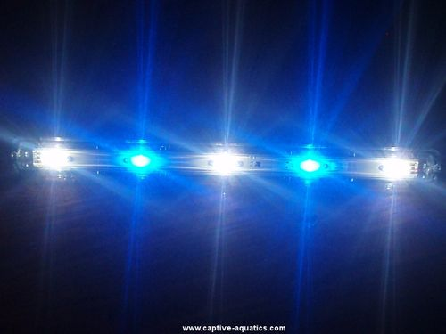 Aquaray_led_reef_aquarium_lighting_strip_cree_xre_royal_blue_white_2