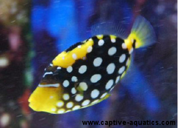 image from blog.captive-aquatics.com