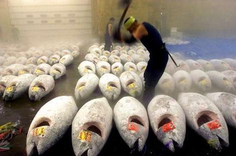 Tuna-black-market-bluefin-tuna