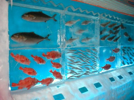 Japan-ice-museum-frozen-aquarium-2
