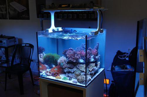 X Aqua Reef Aquarium Led Light Teaser Pics Captive