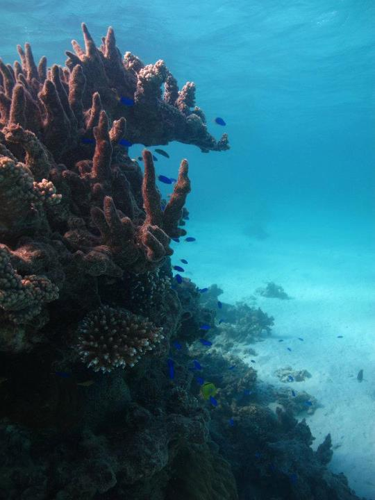 Finger coral outcrop