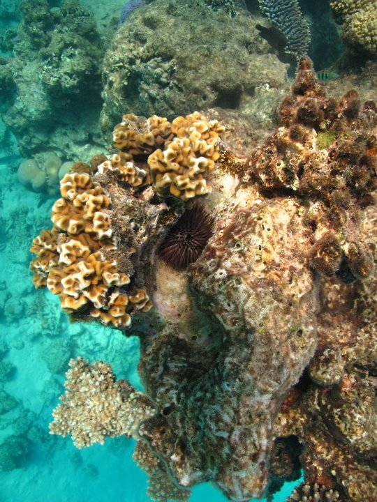 Southern GBR